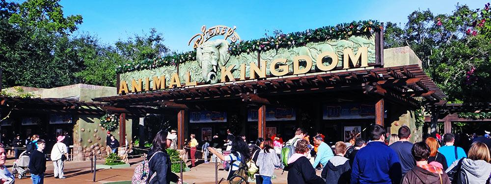O parque Disney's Animal Kingdom é um parque que normalmente fecha algumas horas antes dos outros parques do complexo Walt Disney World
